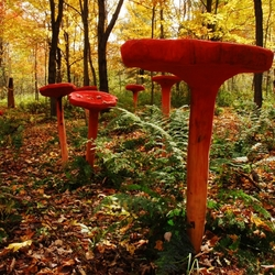 Karen Macher. Chanterelles rouges, 2008. Bois (pin), teinture. ©Mouvement Essarts