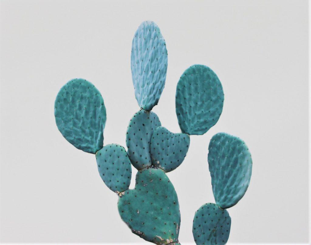 Affiche cactus Cactus Béton